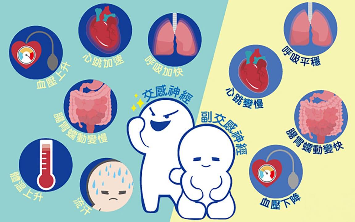 交感、副交感?自律神經是什麼?對身體的影響有哪些?